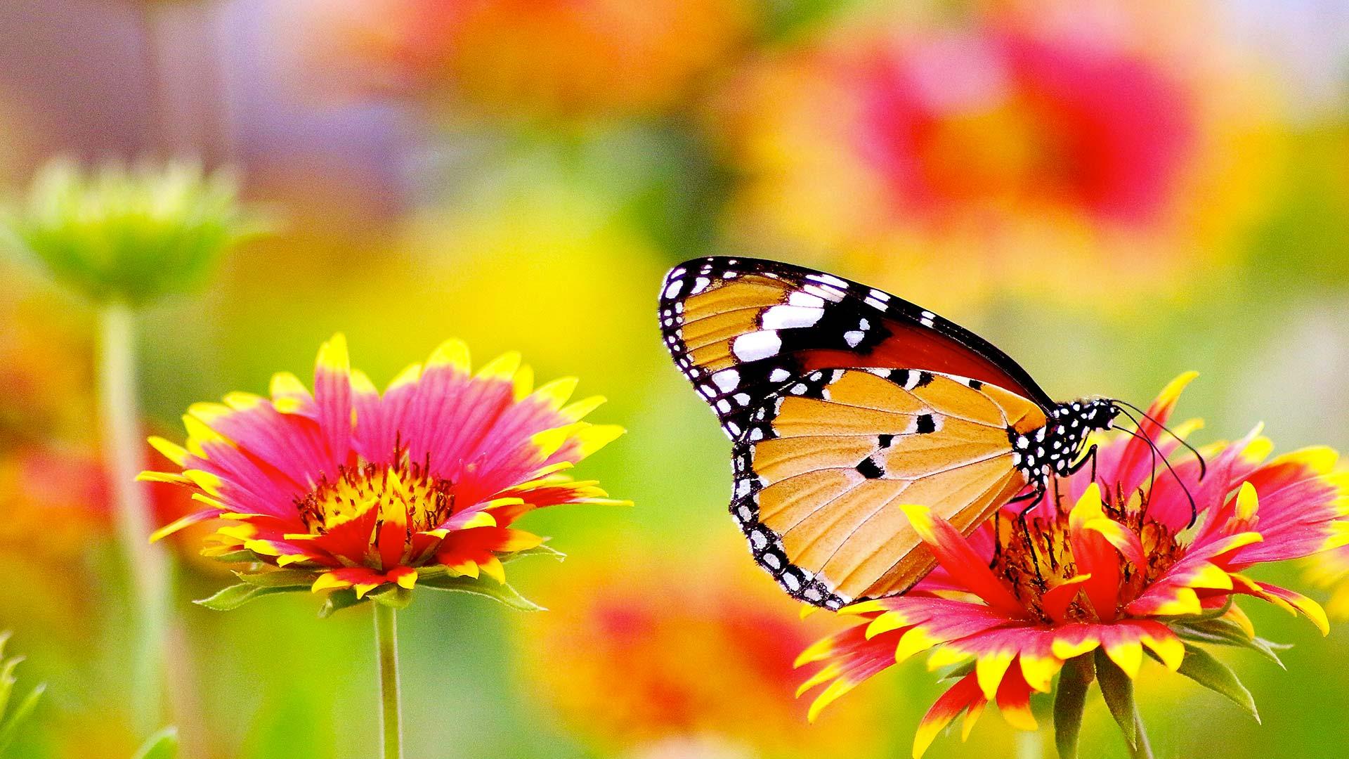 Photo de papillon en illustration de la page d'accueil de l'association Odelia, gestionnaire d'établissements pour personnes âgées